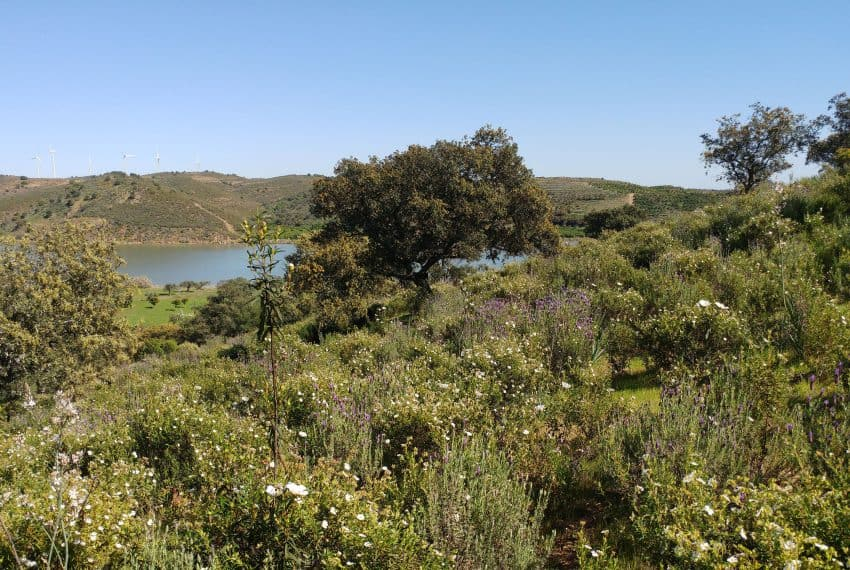 land with project Guardiana river (1)